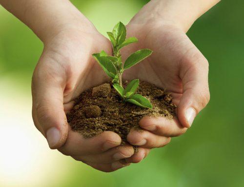 Talajerőpótló gazdálkodás, mint fenntartható növénytermesztési módszer