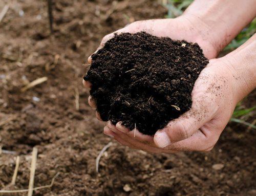 Mikroorganizmusok jelentősége a szén körforgásában