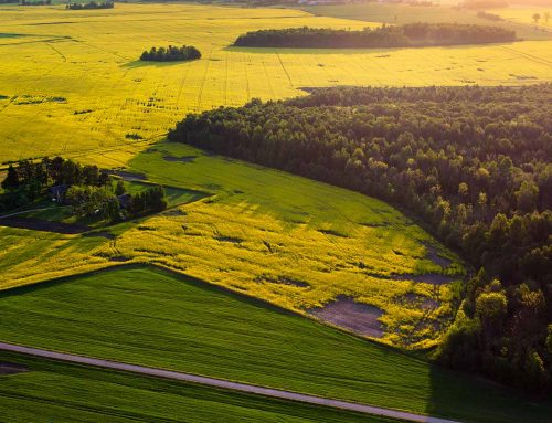 Mezőgazdasági termőtalajok védelme