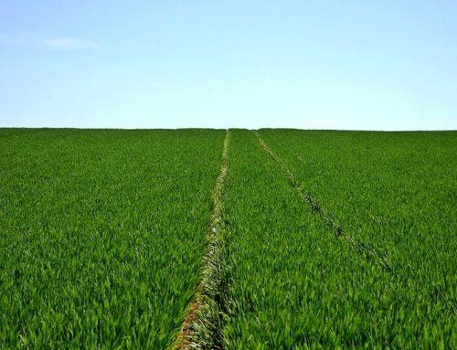 Több folyamat is veszélyezteti a termőtalaj minőségét Magyarországon