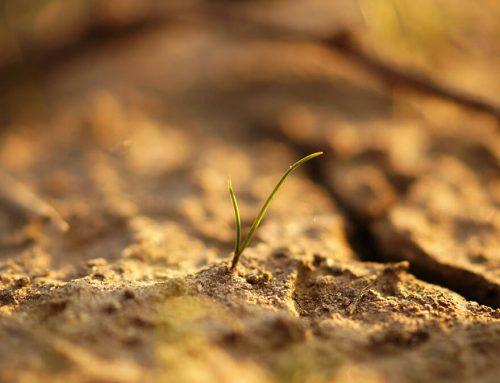 A hazai talajok állapota is aggasztóan romlik
